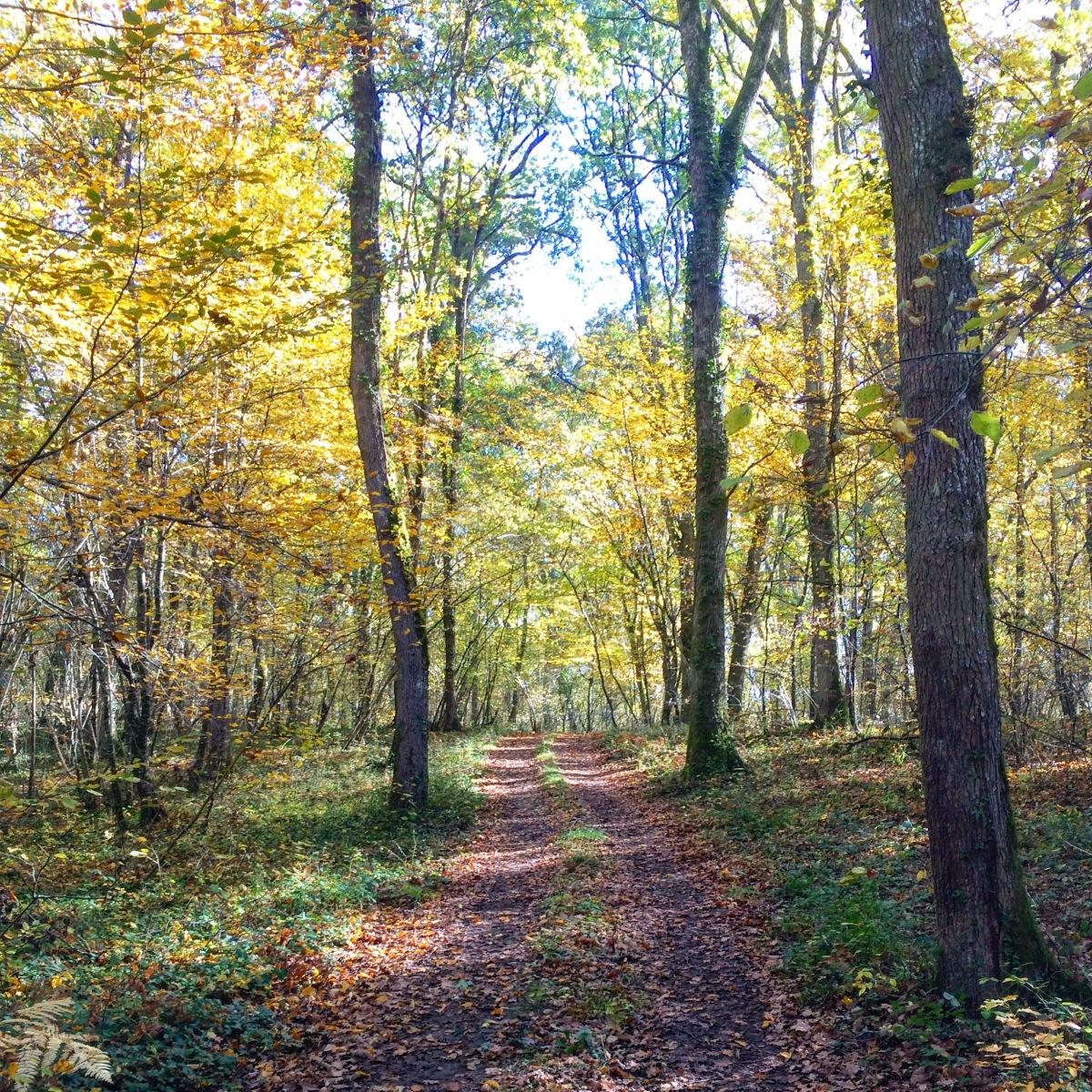 Plan d'entraînement Trail 15 km - 3 séances - 8 semaines